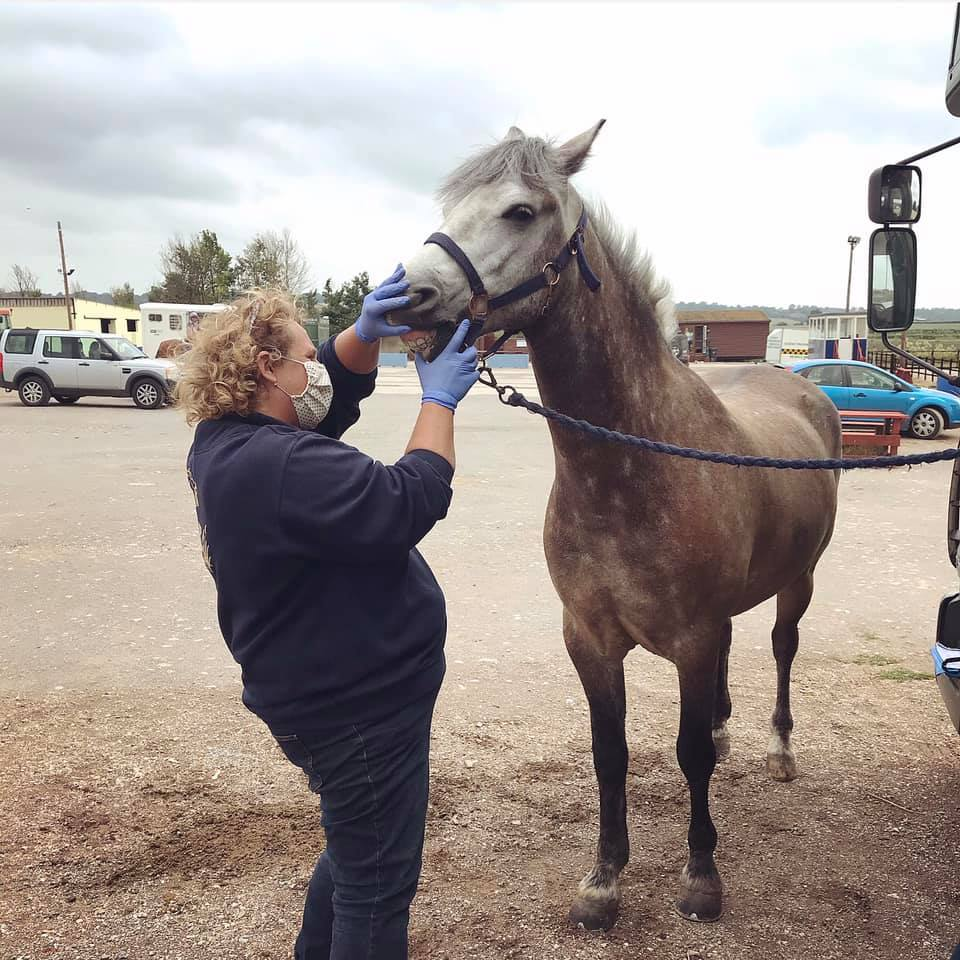Charlotte Warman in PPE examines a horse's mouth